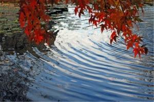 ripplesinthewater